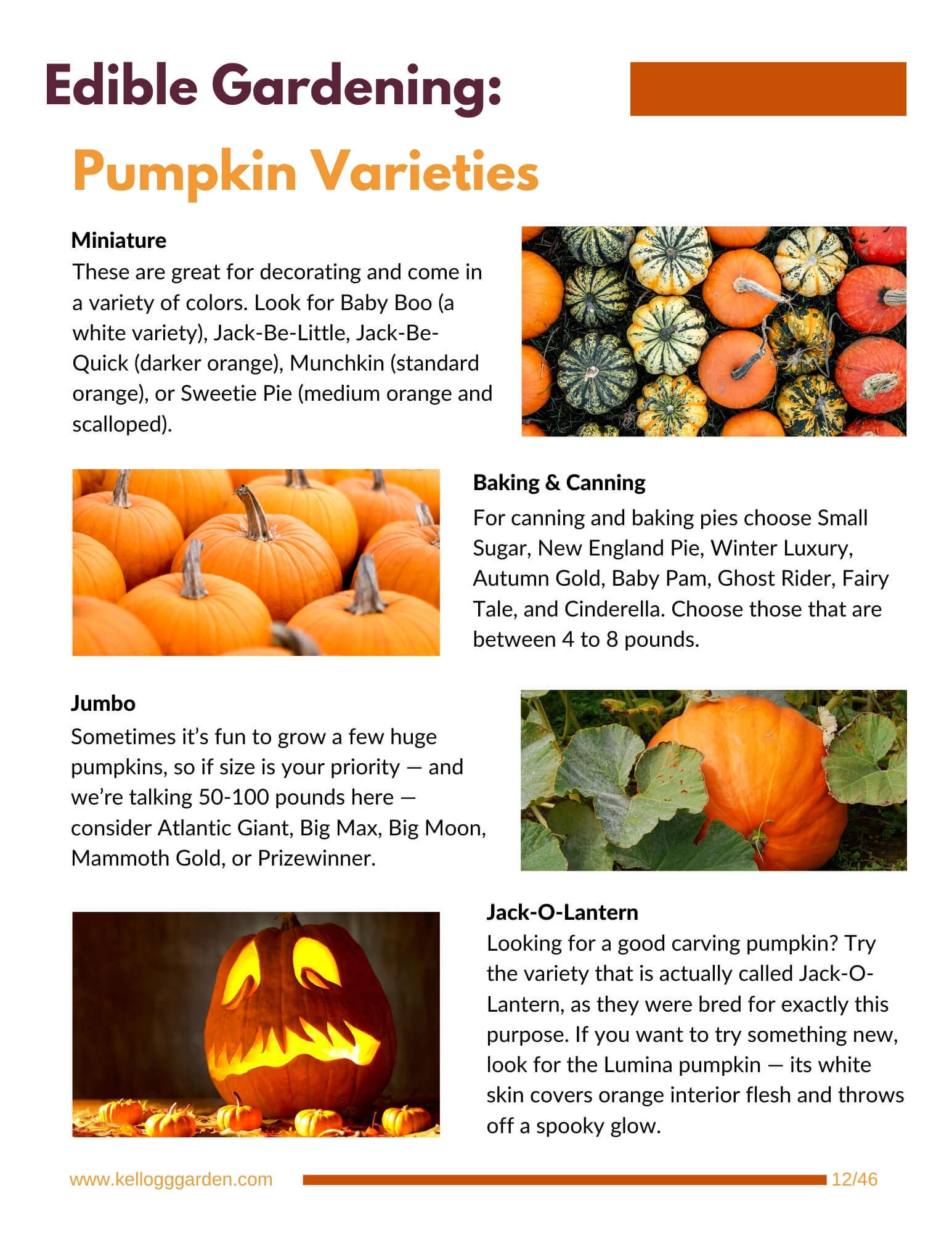 pumpkin varieties guide page