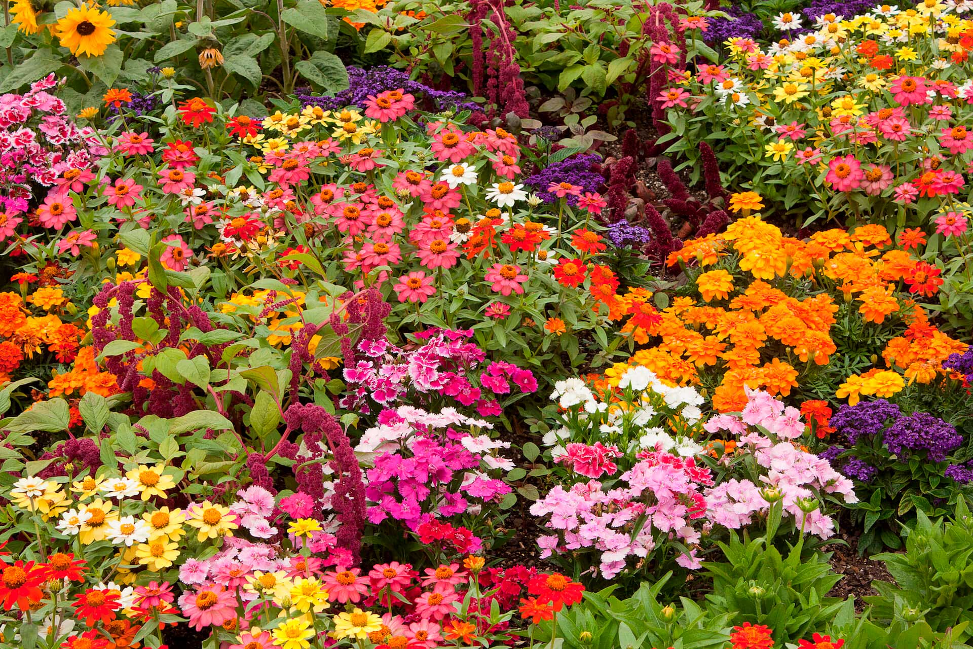 A variety of vibrantly colored flowers in one garden bed.