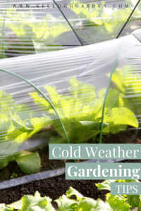 """Winter Garden Vegetables Under Row Covers with text, """"Cold Weather gardening tips"""""""