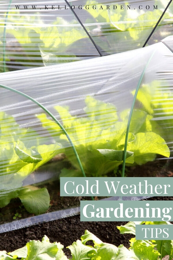 "Winter Garden Vegetables Under Row Covers with text, ""Cold Weather gardening tips"""