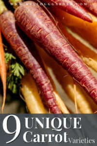 "A bunch of yellow, orange, and purple carrots with text, ""9 Unique Carrots Varieties"""