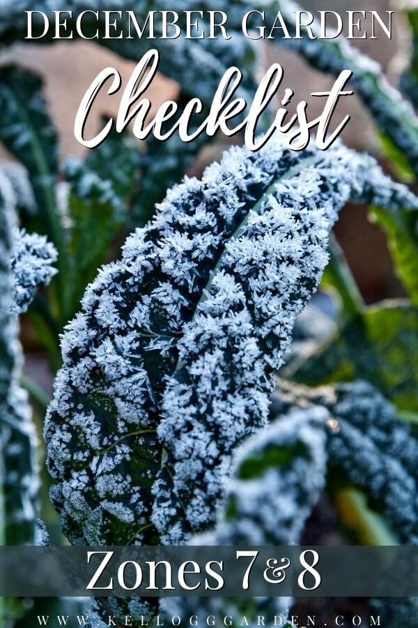 "Kale leaves covered in frost with text, ""December Garden Checklist Zones 7 and 8""."