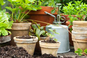 Garden pots with vegetables and herbs