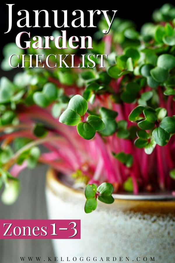 "Close-up of radish microgreens with green leaves and purple stems with text, ""January Garden Checklist Zones 1-3"""