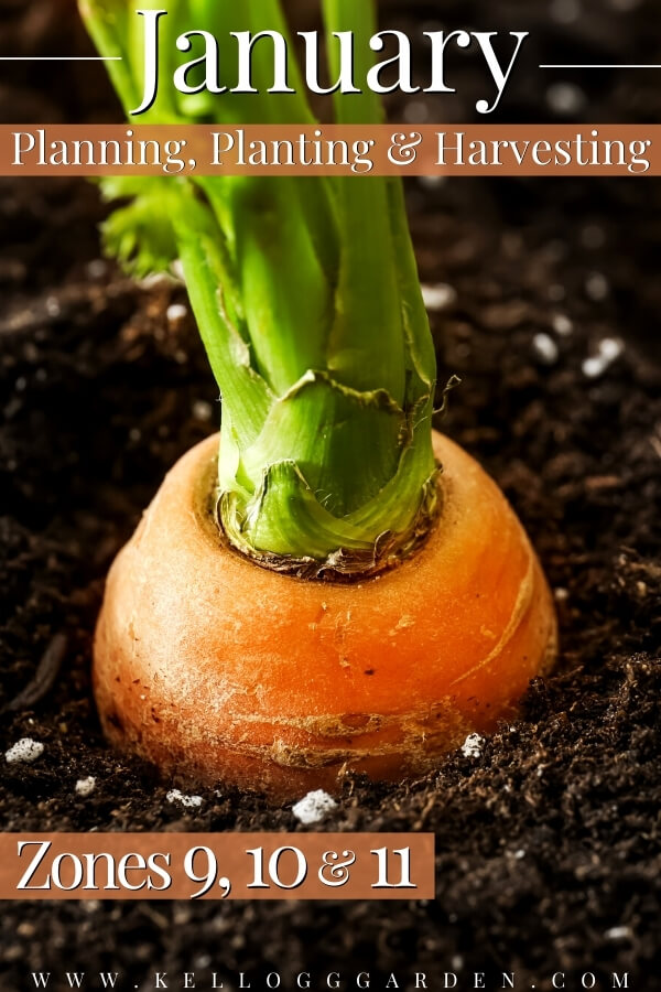 """Carrot growing in the garden with text, """"January planning, planting, and harvesting zones 9, 10, and 11"""""""