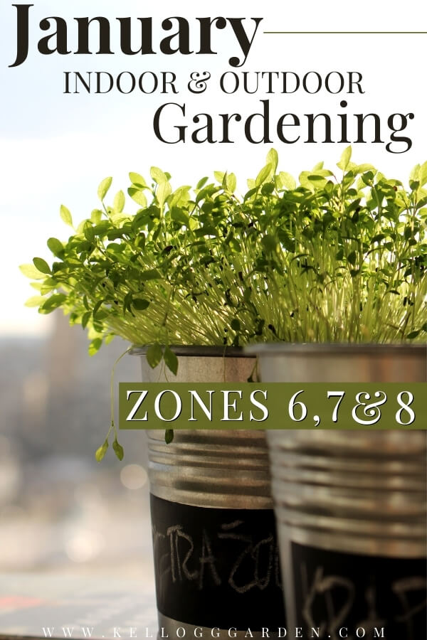 """Microgreens growing in metal containers with text, """"January indoor and outdoor gardening zones 6, 7, and 8"""""""