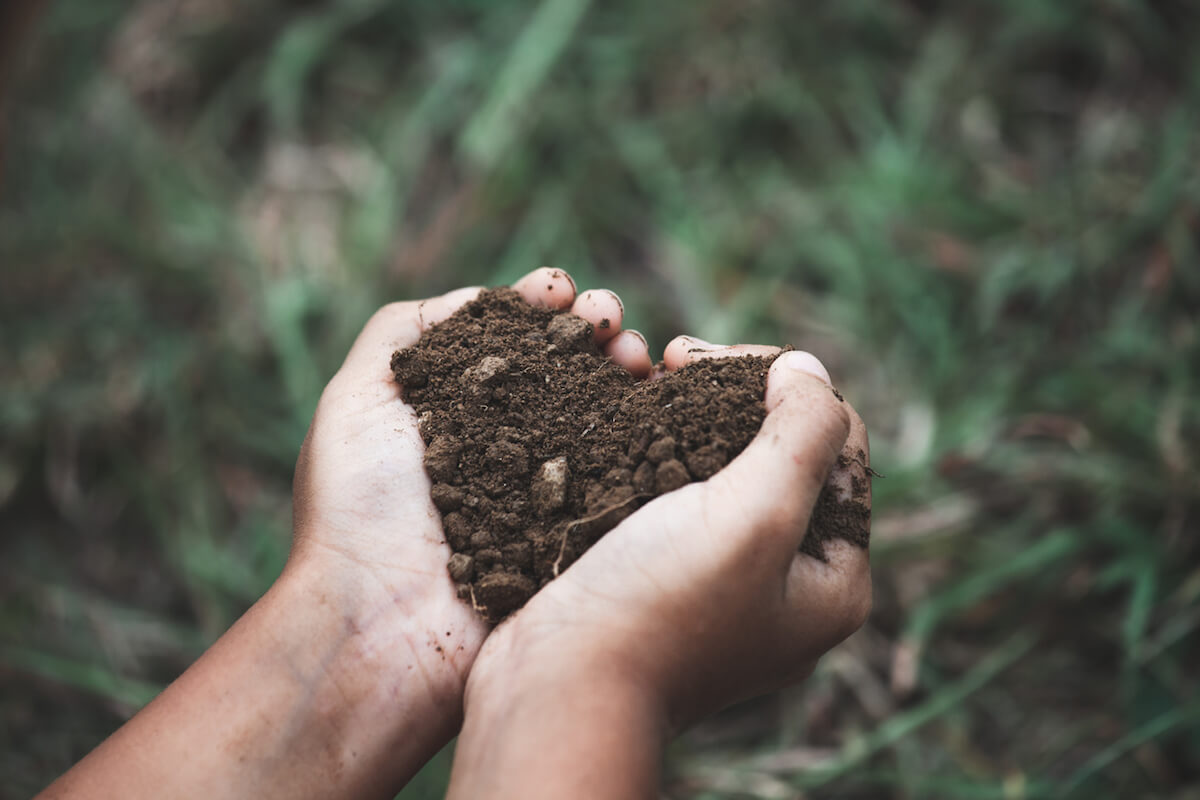 Child hand holding the soil in a heart shape.