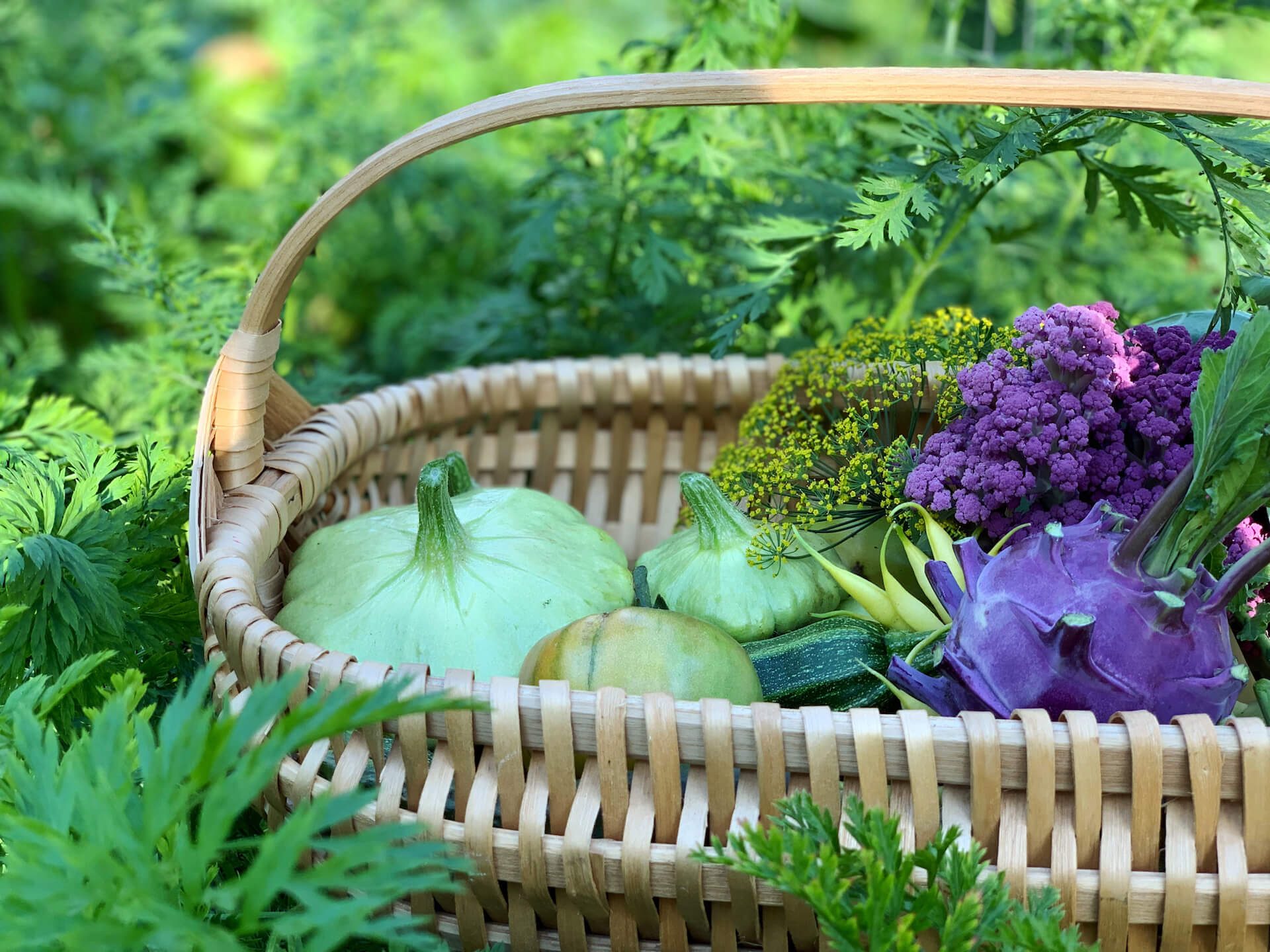 Basket full of garden produce such as purple broccoli, squash, and pumpkins.