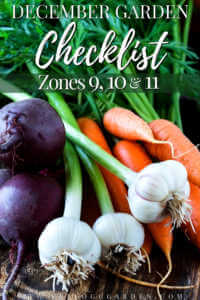 """Beets, garlic and carrots on a dark, rustic table with text, """"December garden checklist zones 9, 10, and 11"""""""