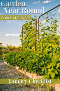 """Raised bed garden with vertical trellises and text on image, """"Garden year round zones 9, 10, and 11. January garden checklist"""""""
