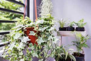 Hanging planter in apartment garden.