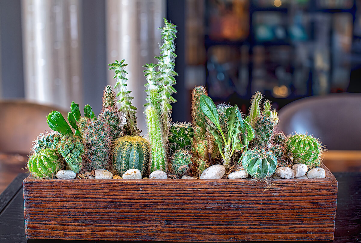 Many small succulents in different shapes and colors growing in a wooden rectangle planter.