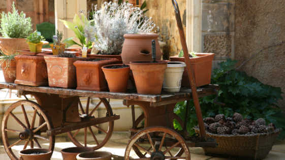 Assorted pots with herbs and plants on a wagon.