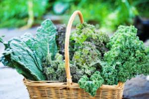 Basket of Freshly Harvested Kale Vegetable Varieties.
