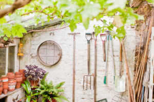 Tools hanging on wall of garden shed.