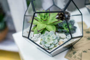 Beautiful miniature succulent bonsai plants and houseplants in a terrarium.