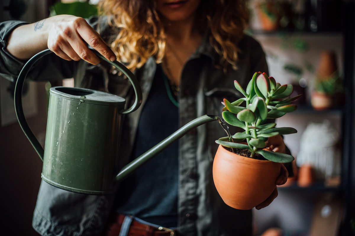 Woman watering potted succulent