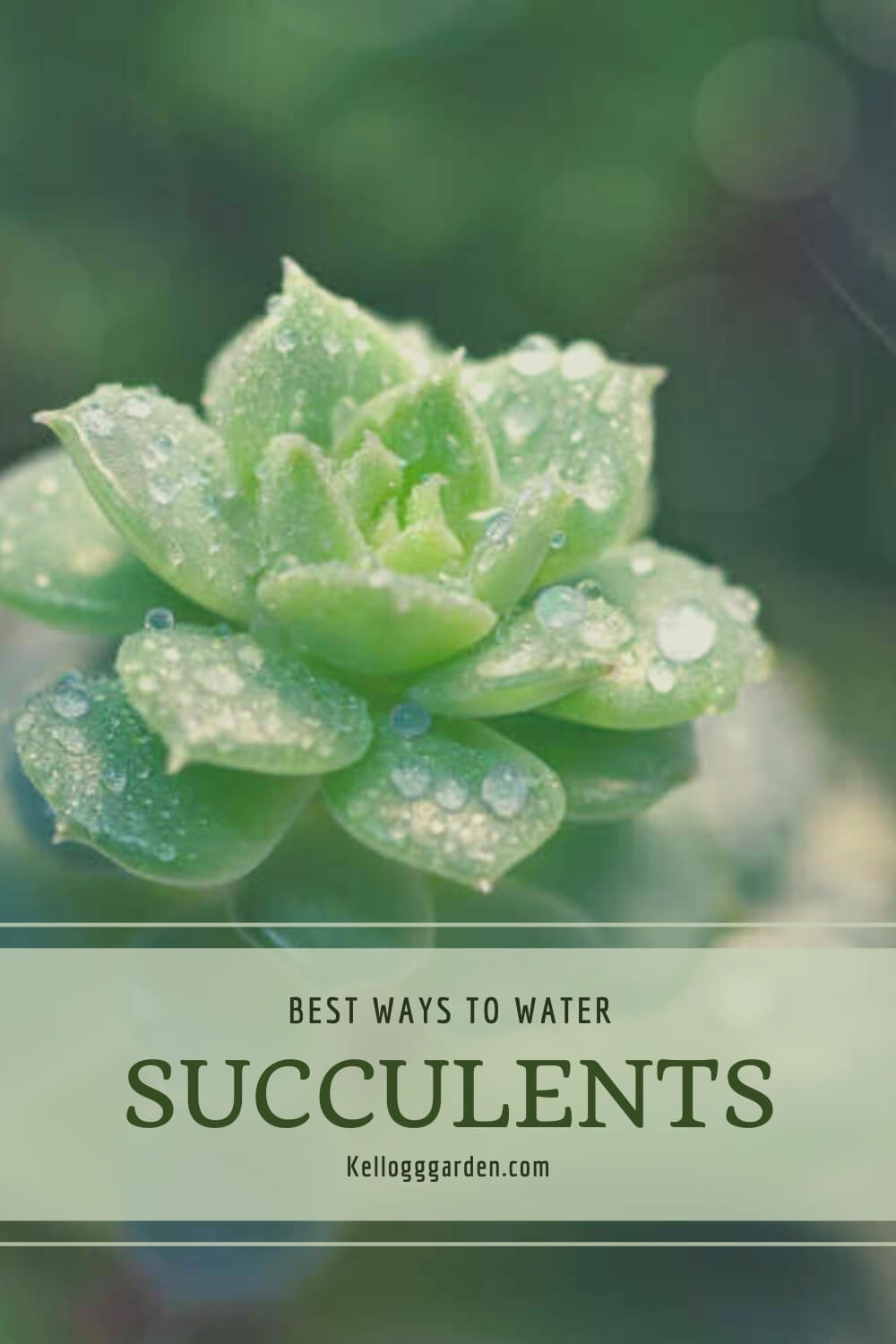 A green succulent with water droplets