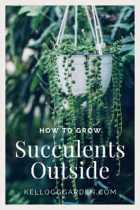 A hanging pot with succulents