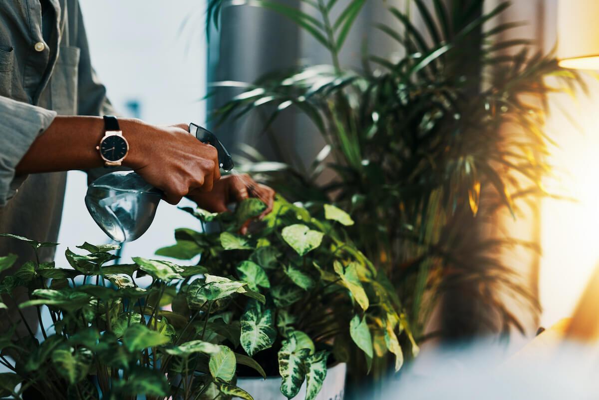 woman watering her indoor plants.