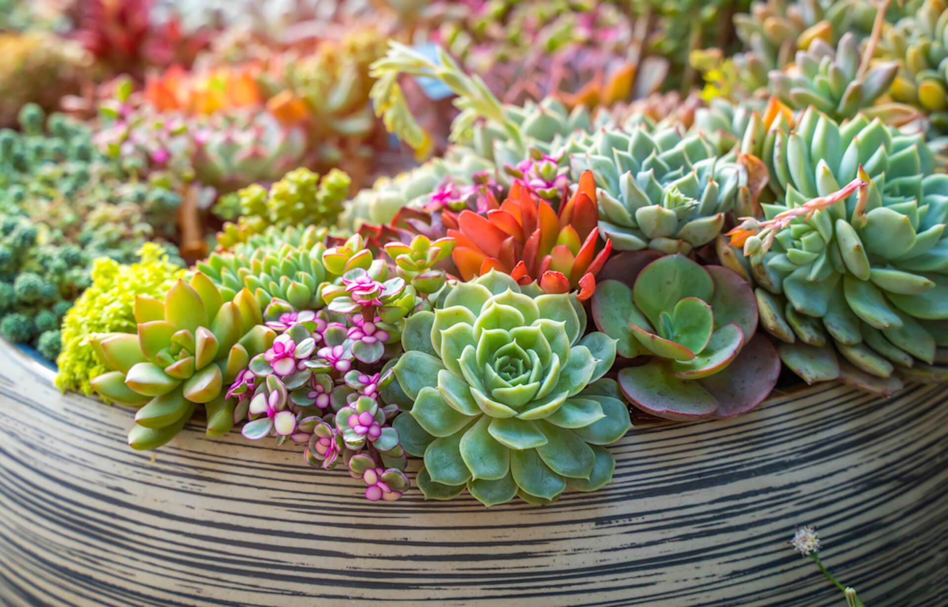 Indoor Succulent Planter Kellogg Garden Organics