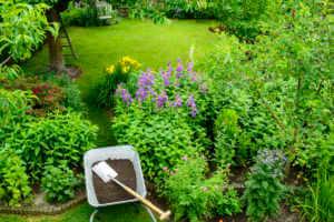 wheelbarrow with compost next to flower garden.