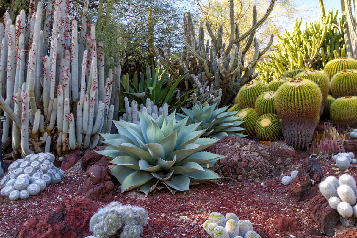 Outdoor succulent garden with multiple types of cacti and succulents.