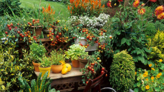 Large patio garden with containers filled with vegetables and flowers.