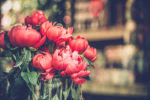 Pink and red peonies in a vase.
