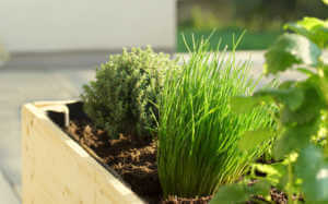 herbal raised bed on a balcony.