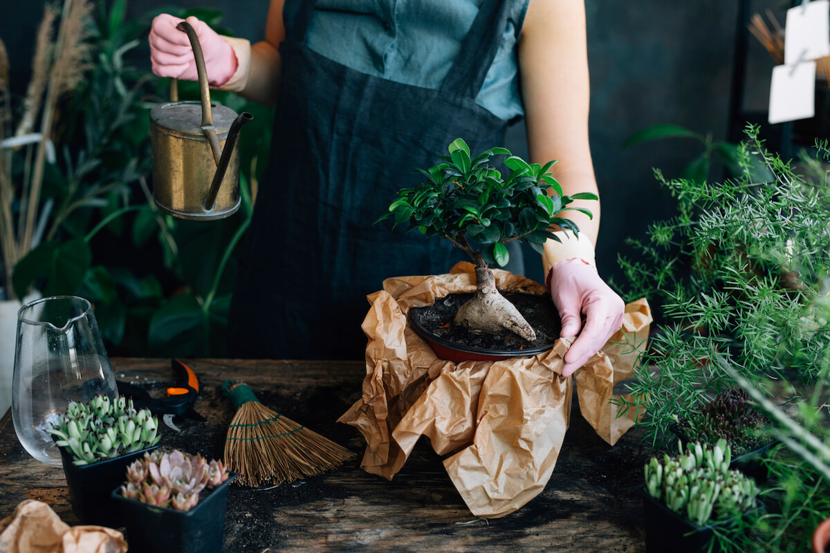 Hands Watering Succulent Plants
