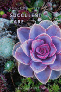 close up of succulent plant in garden.