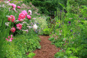 Garden pathway lined with peonies.