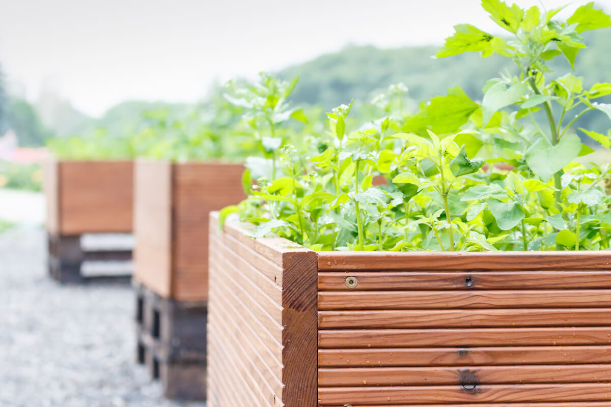 Outdoor large brown wooden pots with green plants.