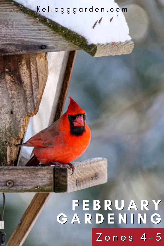 Red bird on a birdhouse in snow