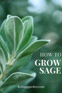 Vibrant Green Sage