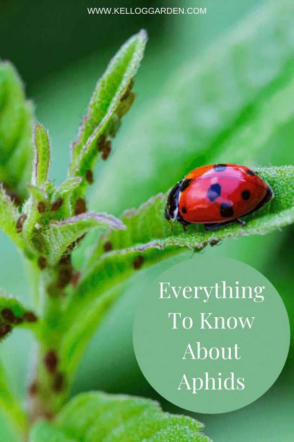 Close up of a ladybug on a plant.