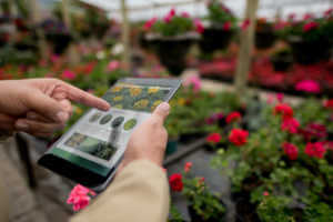 Hands using a tablet computer at a garden center