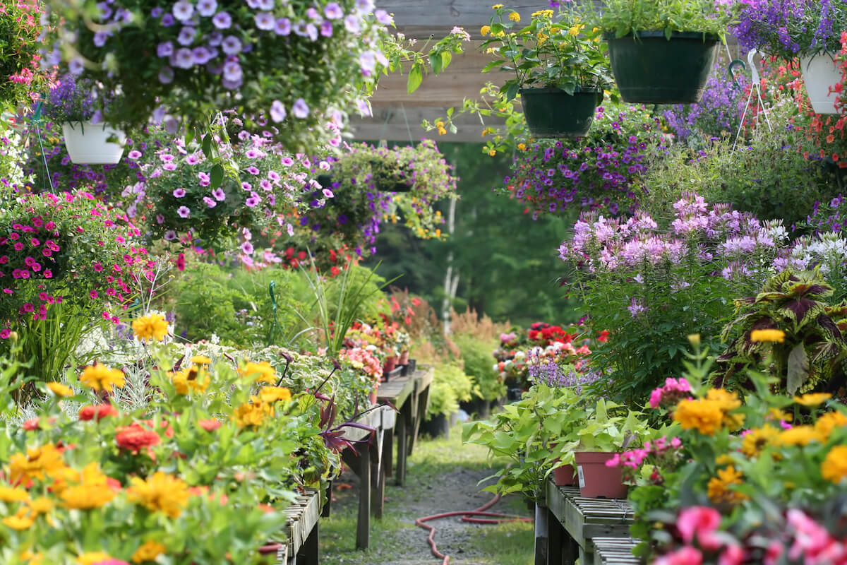 An assortment of potted and hanging plants at a garden center.