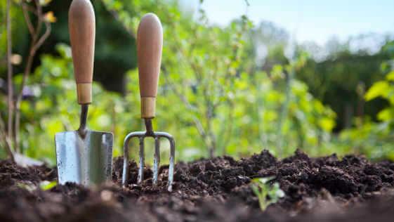 Wooden handled stainless steel garden hand tools standing in soil.