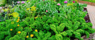 Vegetable and flower garden in a raised bed