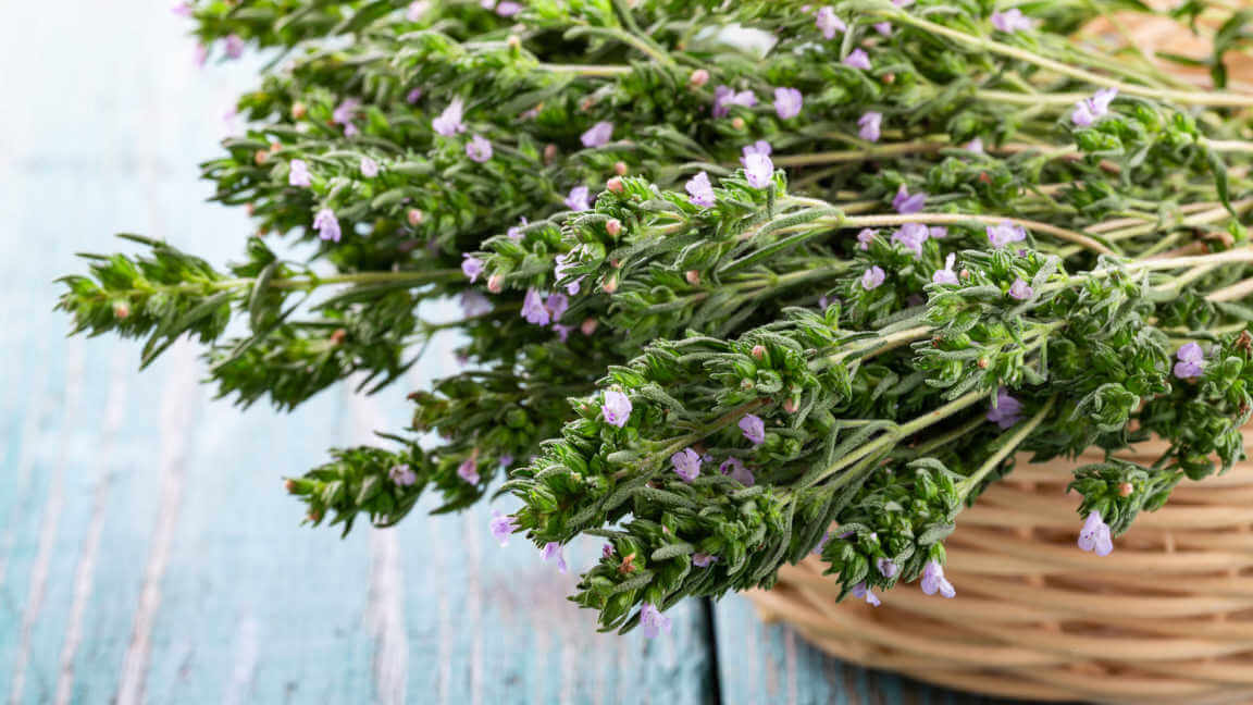 Basket filled with flowering thyme