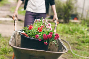 girl planting carnations in the spring garden