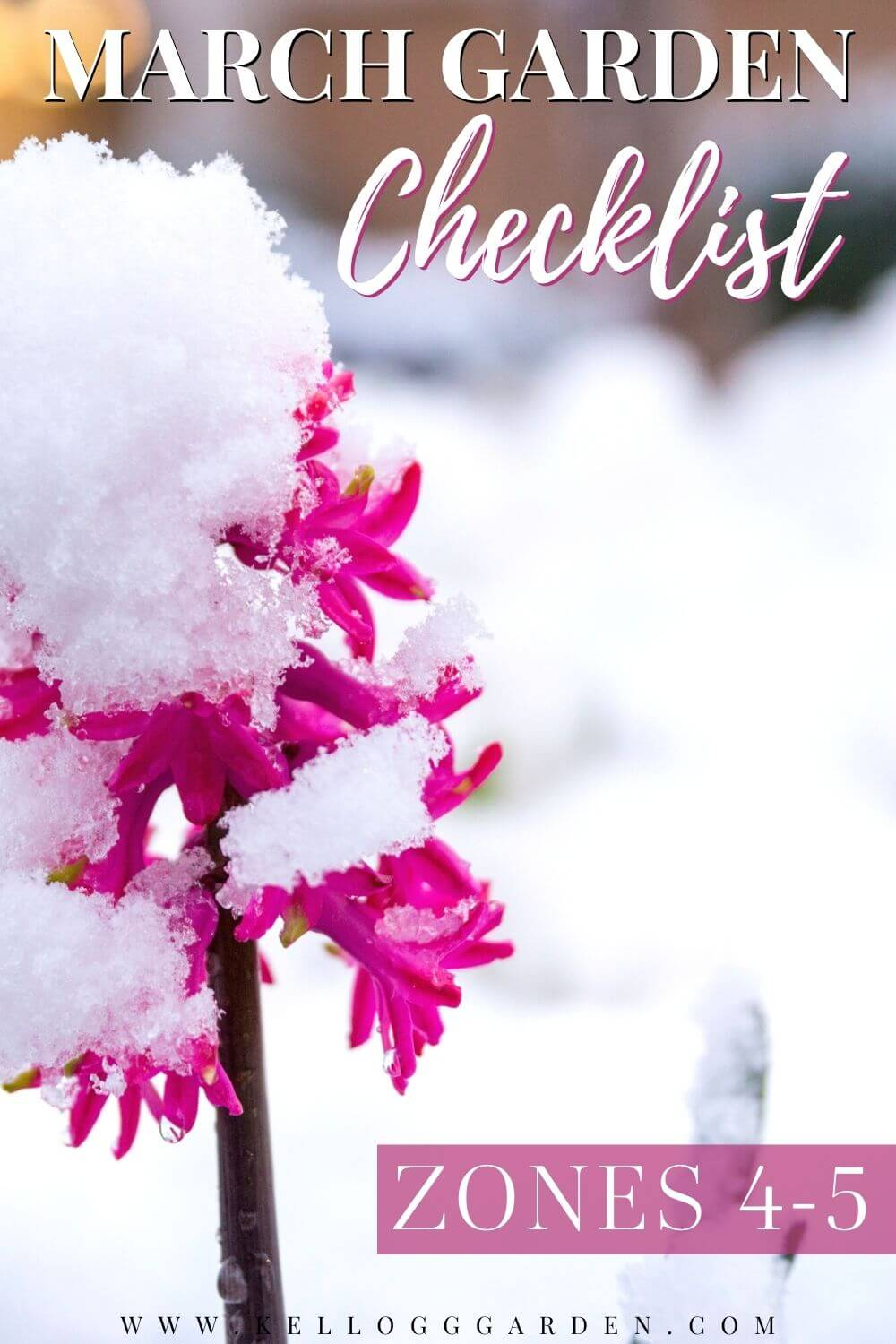 snow on pink flowers