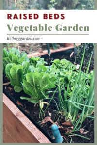 wooden raised bed vegetable garden.