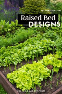 Close up of wooden raised bed vegetable garden.