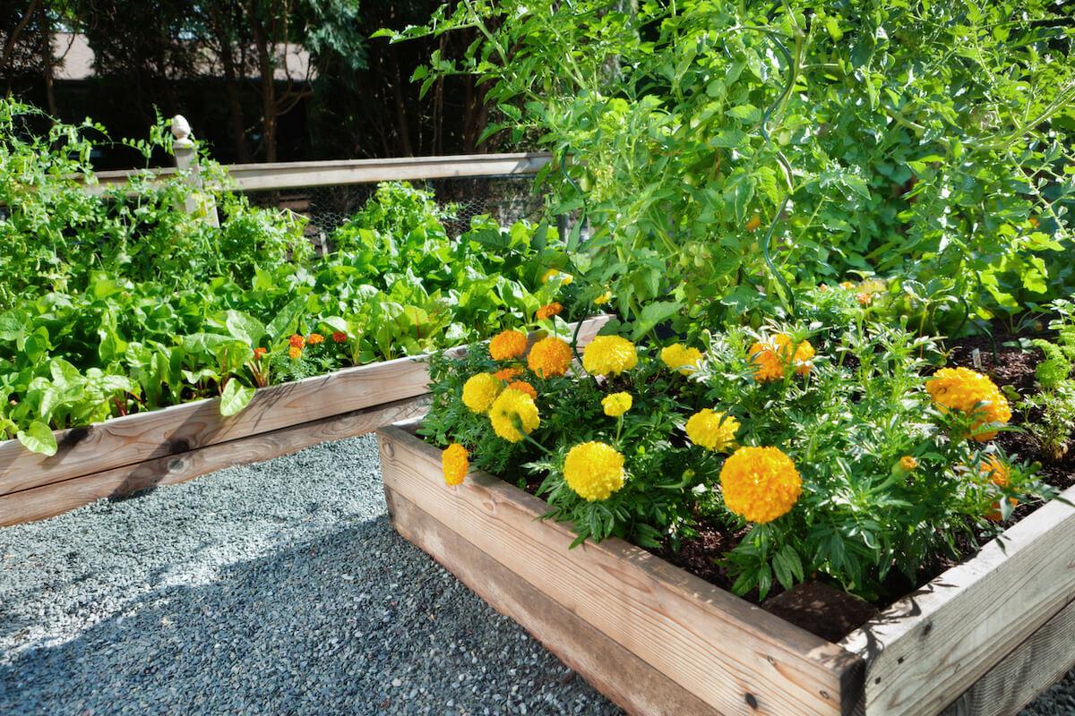 A wooden raised bed flower garden.
