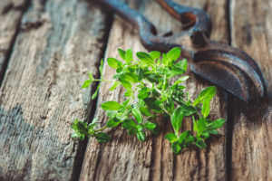 A thyme clipping