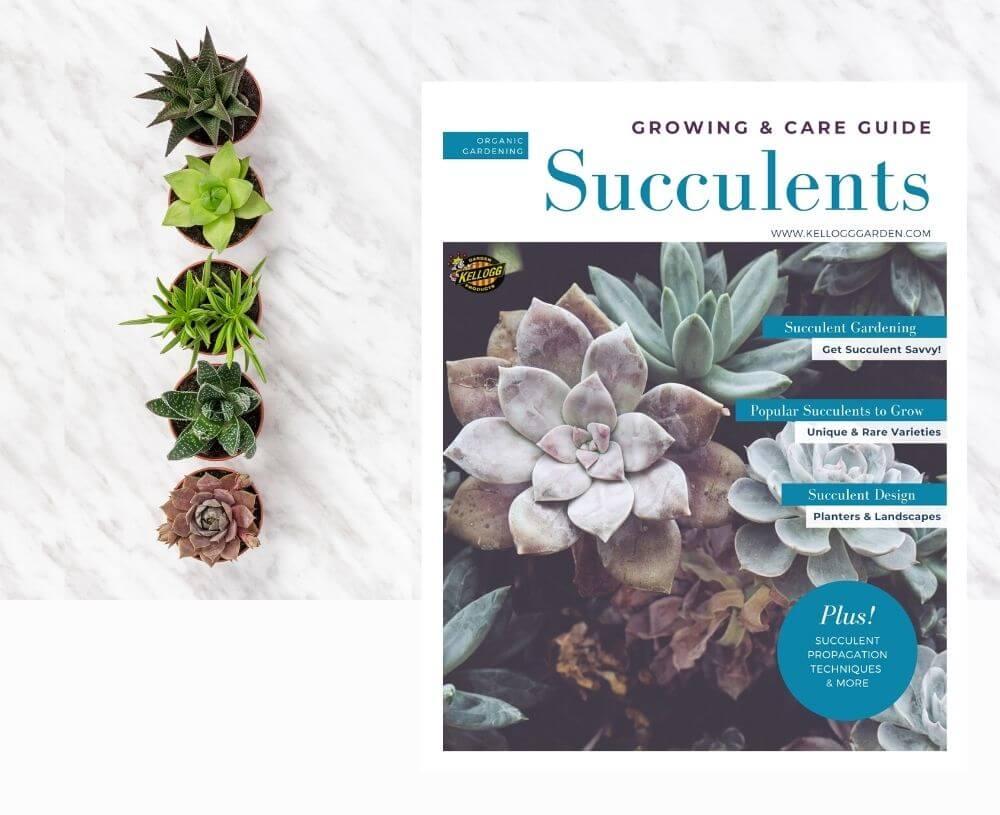 Succulent guide