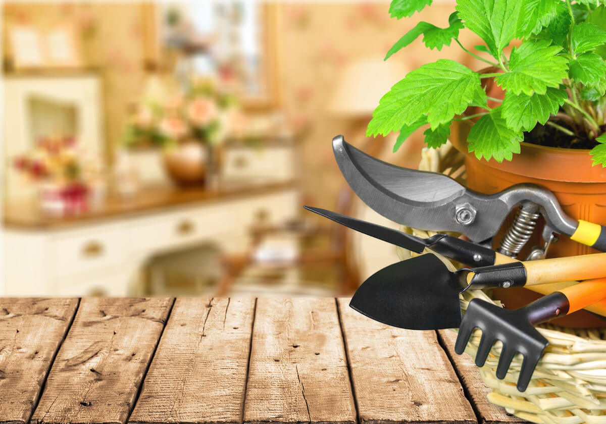 Group of Gardening tools on table